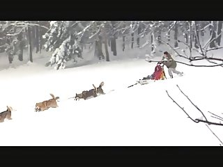 Natural Wonders Of The World Snow Bunnies 1 by JaTTriXX